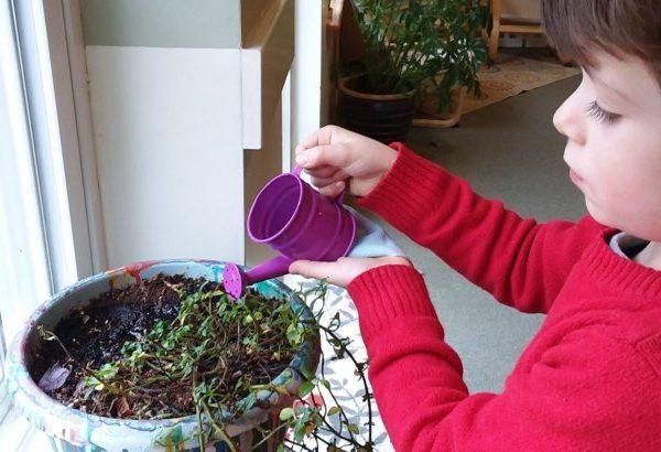 boy watering a plant